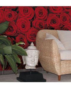 Rode Rozen - Interieur