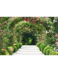 Rosa Blumenbogen 7-teilige Fototapete 350x260cm