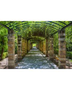 Garten von Athen 7-teilige Fototapete 350x260cm