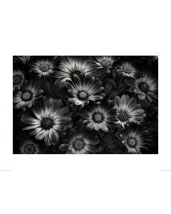 Blumen in Schwarz und Weiß Art Print Dennis Frates 60x80cm