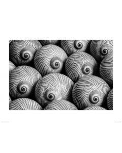 Gestreifte Schale in Schwarz und Weiß Art Print Dennis Frates 60x80cm