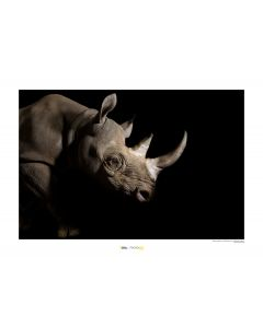 Nashorn Art Print National Geographic 50x70cm
