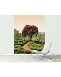 Roter Baum Und Hügel In Sri Lanka 4-teilige Fototapete 184x254cm