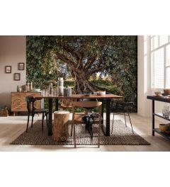 Olivenbaum 8-teilige Fototapete 368x254cm