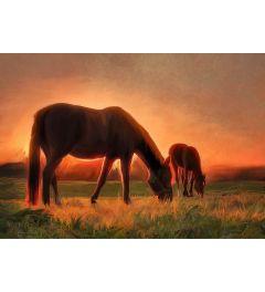 Pferde in der Abenddämmerung