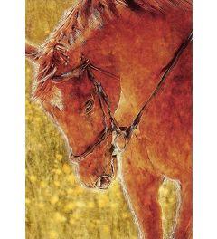 Pferd - Gezeichnet