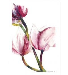 Rosa Magnolien Poster