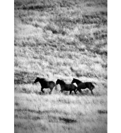 Ranchland #4 bw