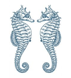 2 Seepferdchen