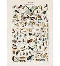 Insekten Art