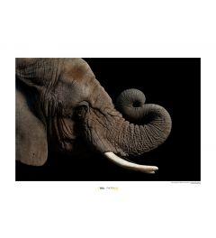 Afrikanischer Elefant Art Print National Geographic 50x70cm