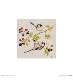Vögel Art Print Jane Bannon 30x30cm