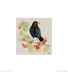 Amsel Art Print Jane Bannon 30x30cm