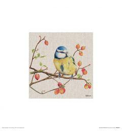Blaumeise Art Print Jane Bannon 30x30cm