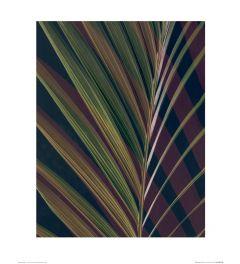 Dark Tropics II Art Print Ian Winstanley 40x50cm
