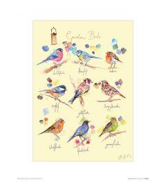 Gartenvögel Art Print Jennifer Rose 30x40cm