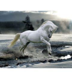 Bob Langrish Pferd Schnee Poster 40x50cm