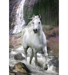 Paard bij Waterval - Bob Langrish