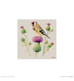 Stieglitz auf Distel Art Print Jane Bannon 30x30cm