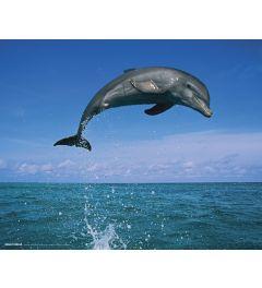 Springender Delphin Poster 40x50cm