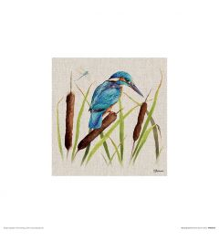 Eisvogel Art Print Jane Bannon 30x30cm