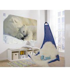 IJsberen - Interieur