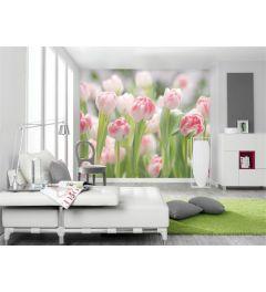Tulpen Veld - Interieur