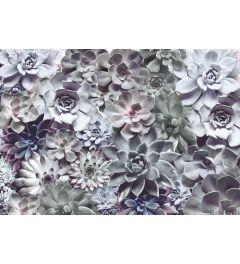 Blumen - Schatten
