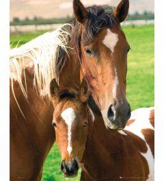 Stute und Fohlen Pferde Poster 40x50cm