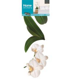 Weiβe Orchidee