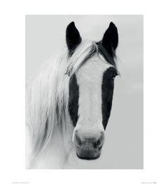 Nordic Horse I Art Print Ian Winstanley 40x50cm