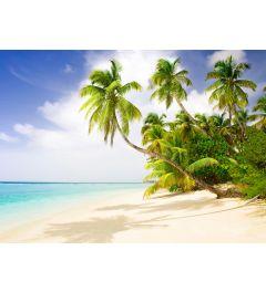 Strand in de Stille Oceaan