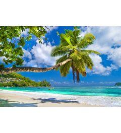 Palmendstrand Seychellen