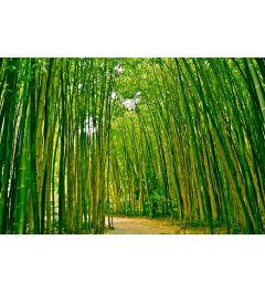 Bambus Wald 7-teilige Fototapete 350x260cm