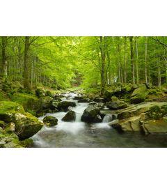Wasserströmung in Wald