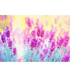 Lavendel 7-teilige Fototapete 350x260cm