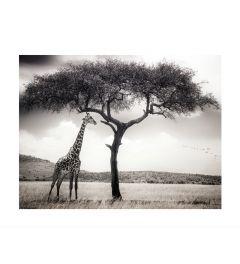 Giraffe In Der Savanne Art Print