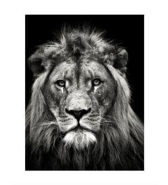 Löwe Art Print