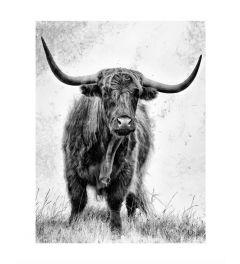 Schottischer Highlander Schwarz Und Weiß Art Print