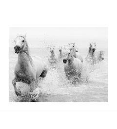 Laufende Pferde Art Print
