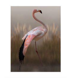 Flamingo Art Print