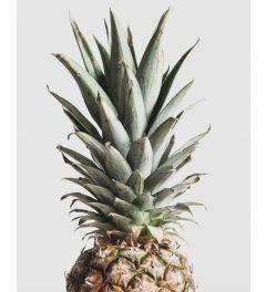 Pineapple Kunstdruk