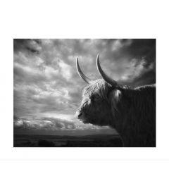 Schottischer Highlander Porträt Art Print