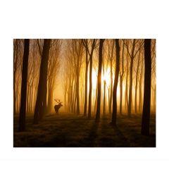 Hirsch Im Wald Art Print