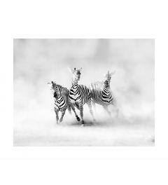 Laufende Zebras Art Print