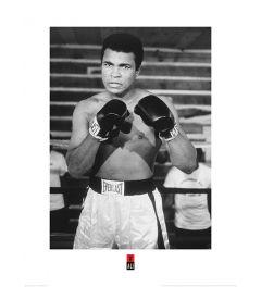 Muhammad Ali Pose Art Print 60x80cm