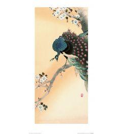 Ohara Koson Peacock on a Cherry Blossom Tree Art Print 30x60cm