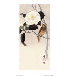 Ohara Koson Songbird and Flowering Camellia Art Print 30x60cm