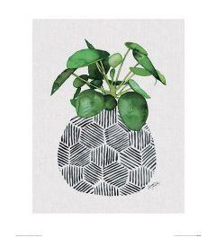 Summer Thornton Chinese Money Plant Art Print 40x50cm