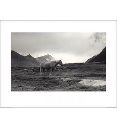 Zusammen grasen - Lofoten Island